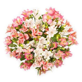 Alstroemeria Selection